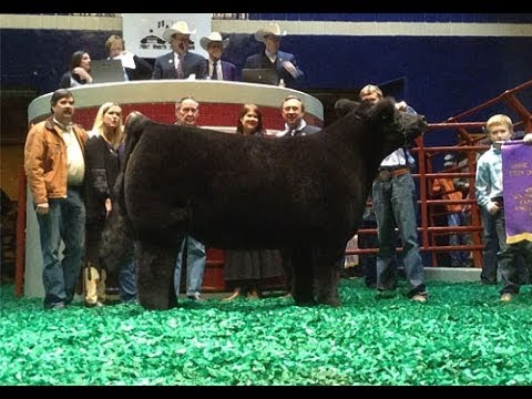 2014 Grand Champion Steer Sells For 200 000 At Fort Worth