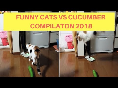Funny Cats Scared of Cucumber Compilation 2018