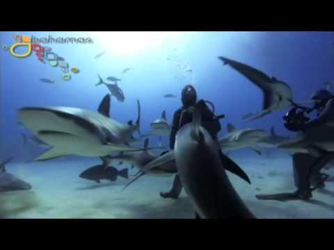 Aqualise - DIVE INTO THE BAHAMAS - Video by Oceanicallstars