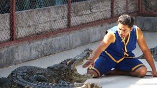 Crocodile show Шоу крокодилов на острове Пхукет Тайланд