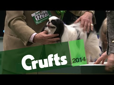 Group Judging | Toy | Crufts 2014