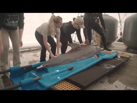 Dolphin Gets Released One Year After Being Found Stranded on Beach