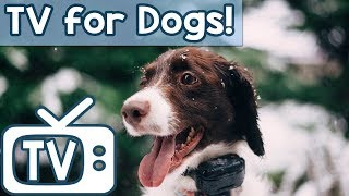 Download TV for Dogs & Anxiety Music  - Videos for Dogs to watch - Relax Your Dog Nature Footage (New 2018) Mp3 and Videos