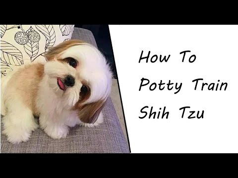 How To Train Your Shih Tzu Potty in 2018 | Housebreak A Shih Tzu