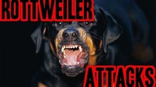 Vicious Rottweiler Attacks Man For Fruit.