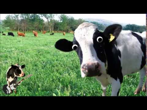 Cow Sound Effect - Royalty Free