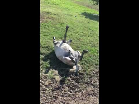 Corey Klug - Who Would've Thought Horses Could Play Dead?
