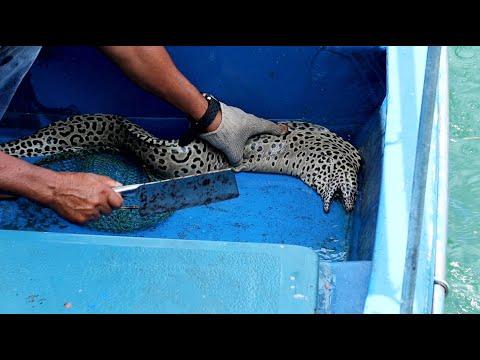 Hong Kong Seafood: Cutting Live Big Spotted Moray Eel In Sai Kung 香港海鮮 西貢生劏大條花點油錐