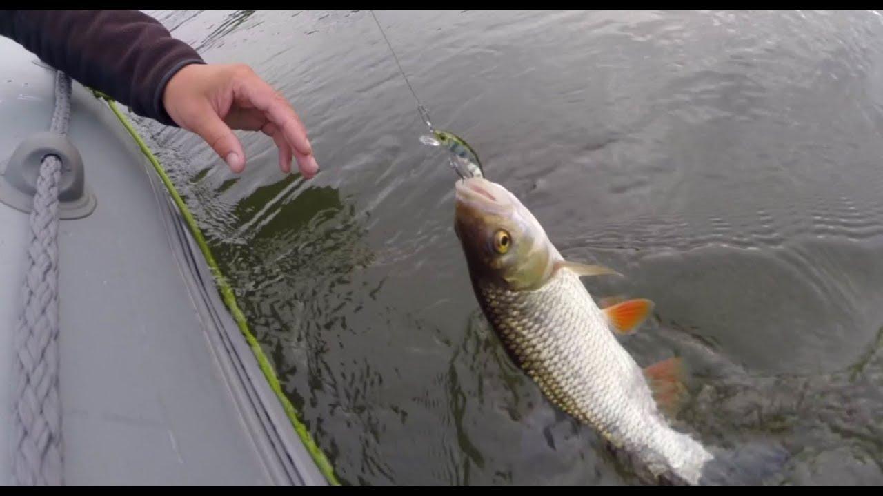 рыбалка на быстрице видео