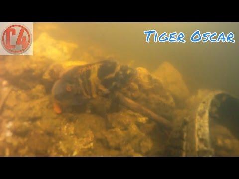 Tiger Oscar Fishing Miami Canal South Florida