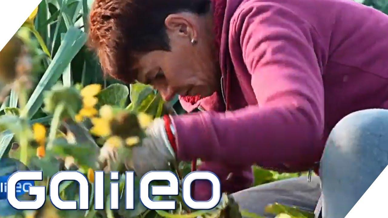 Von Der App Ins Gemuse Die Online Gartner Galileo Prosieben Youtube