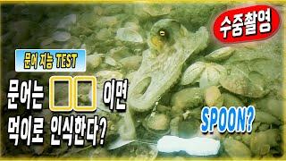 문어 낚시 중 밥 떠먹는 숟가락을 던져봤더니?고화질 수중 영상으로 확인해보자! 초보 문어낚시 꿀팁(선상 문어낚시 장비,액션)바다 영상(Underwater camera,Octopus