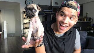 BABY PUG LIVESTREAM! thumbnail