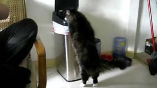 Teaching an old cat new tricks