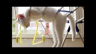 ♥ Cute Cats Compilation 2018 ♥ #02  -  MEOMEOTV ✔