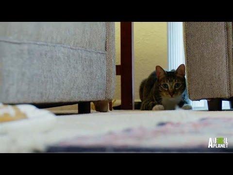 cat south milwaukee
