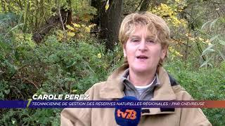 Yvelines | Des chantiers nature en Vallée de Chevreuse