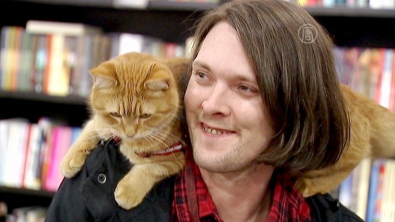 Уличный кот по кличке боб фильм трейлер