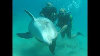 spełnienia marzenia, delfinarium w Ejlat ,anioły w Izraelu i pływanie z delfinami