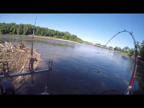Hunting Flatheads On The Wapsipinicon River