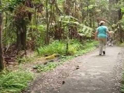 Rainforest at Thurston Lava Tube in Hawaii Volcanoes National Park