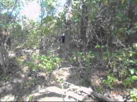 slender man in the woods