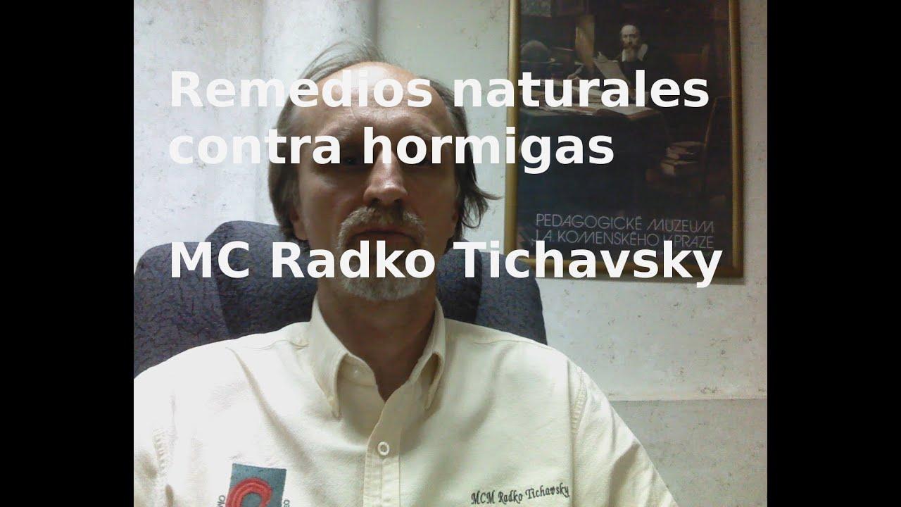 Remedios naturales contra hormigas - YouTube