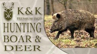Drueckjagd: Driven Hunting Wild Boar & Deer in Germany