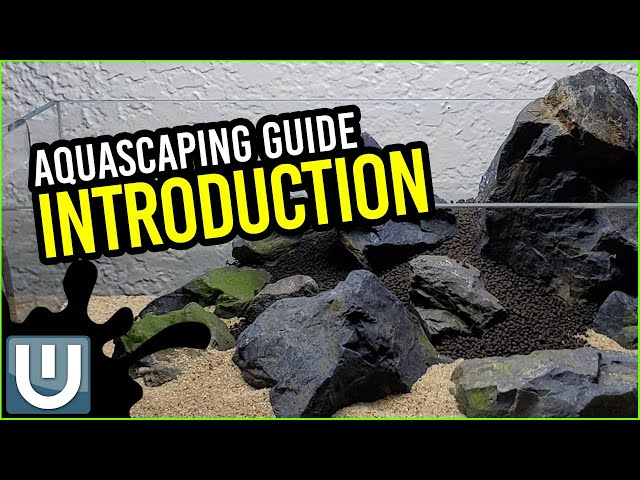 Aquascaping Guide - An Introduction | Part 00