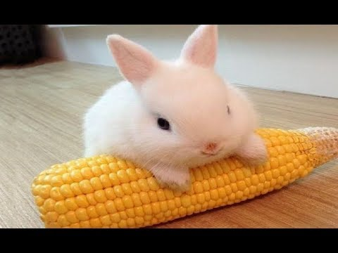 Funny Baby Bunny Rabbit Videos #3 - Cute Rabbits Compilation 2018