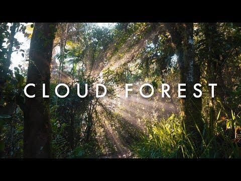 The Forests of Ecuador - Morten's South America Vlog Ep. 16