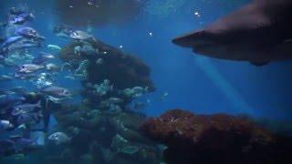 Palma de Mallorca Aquarium - sharks