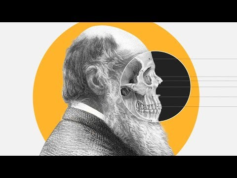 Theory of Evolution: How did Darwin come up with it? - BBCURDU