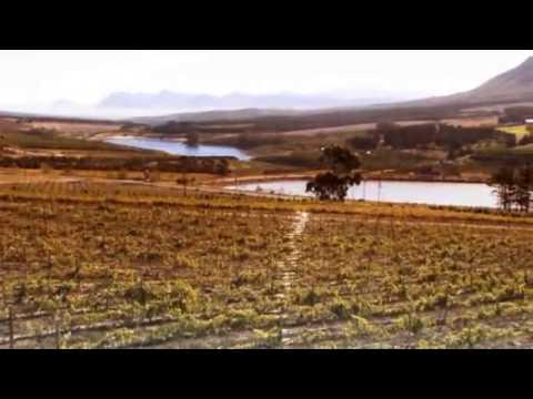 Hermanus - Western Cape - South Africa