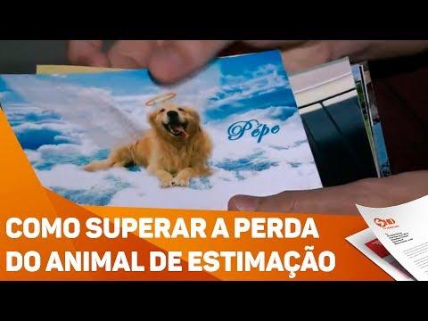 Como superar a perda do animal de estimação - TV SOROCABA/SBT