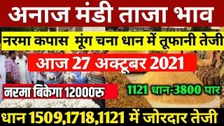 27 अक्टूबर अनाज मंडी भाव | नई 1509 धान नरमा कपास सरसों चना गेंहू ग्वार में तेजी | Gwar ka bhav Today