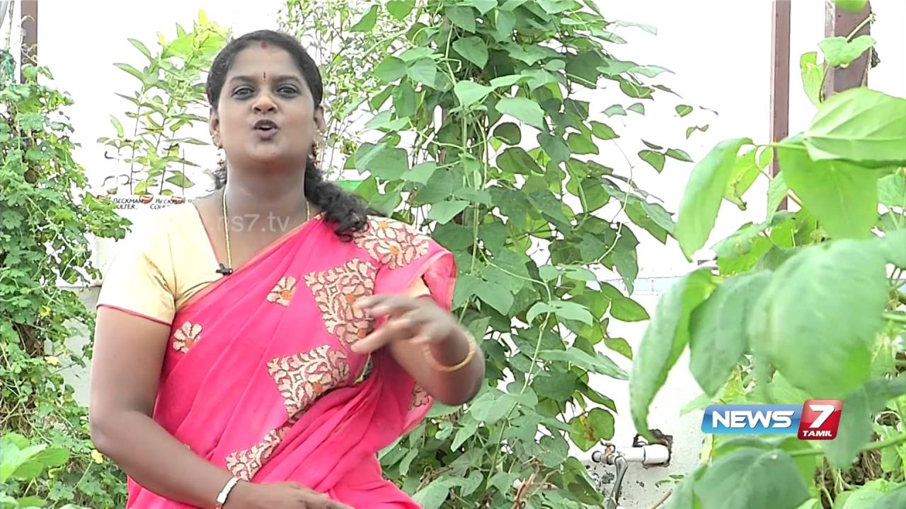 Kitchen Gardening Tips Tips To Setup Perfect Kitchen Garden In Your Home Poovali