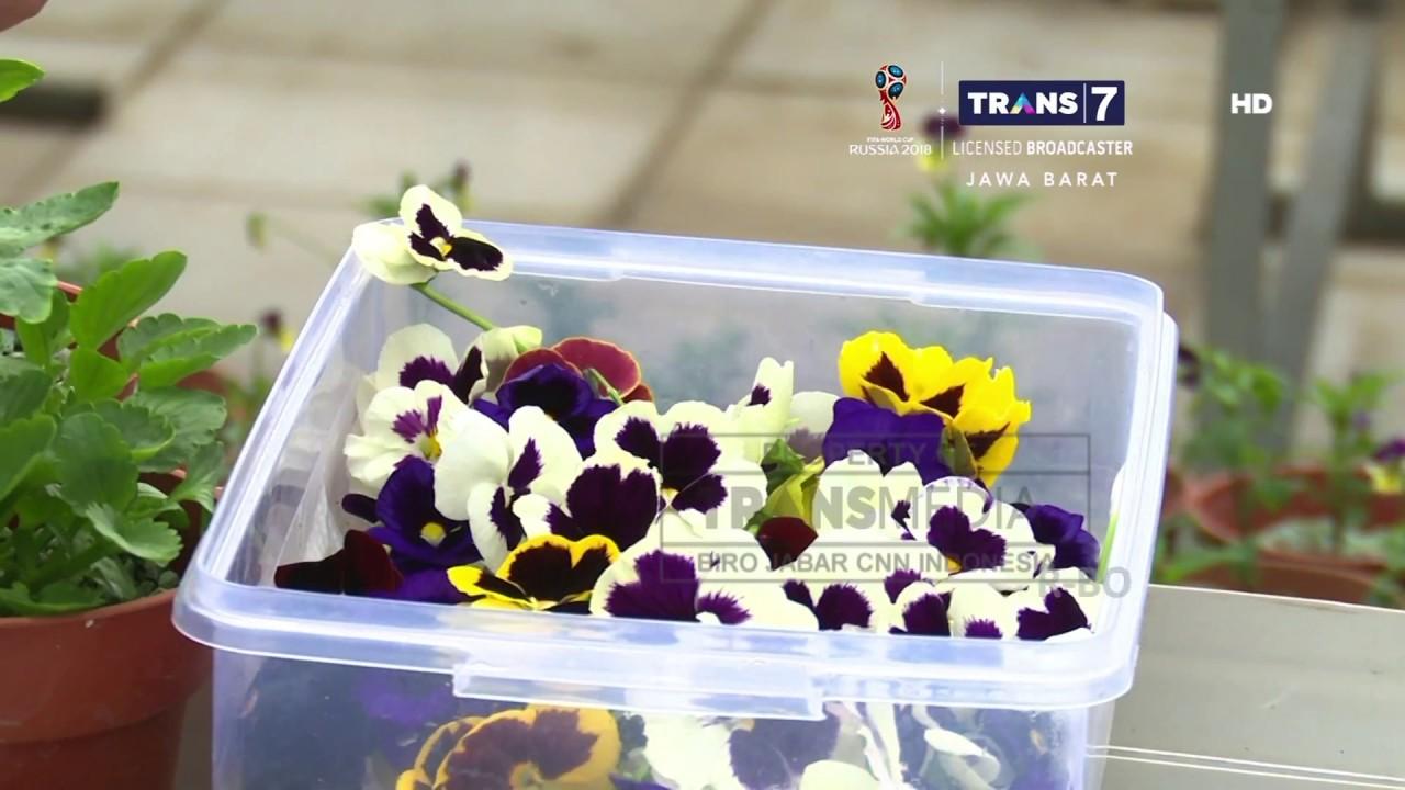 Trans7 Jabar Edible Flower Bunga Yang Bisa Dimakan Youtube