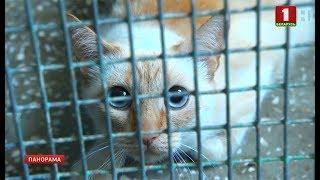 В Беларуси готовят новые правила по содержанию бездомных животных. Панорама