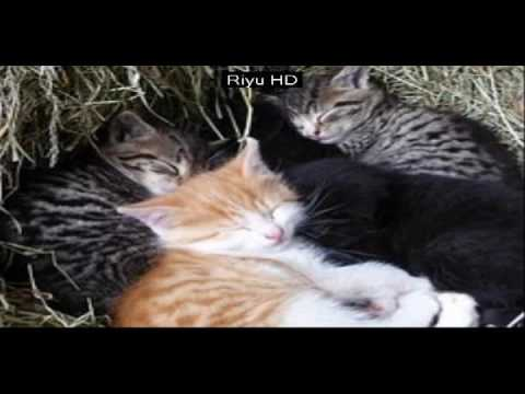 funny kittens pict  - Cats Compilation