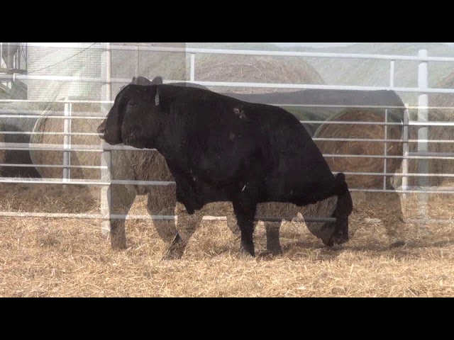 Express Ranches Lot 189