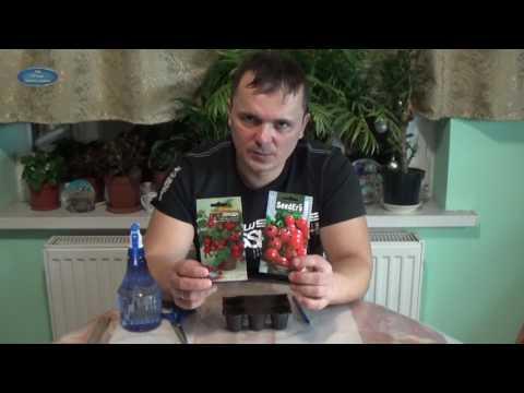 Вопрос: Можно ли вырастить томаты из свеже собранных семян?