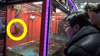 【중국타파】 살아있는 랍스터 뽑는 자판기가 있다 /플래…