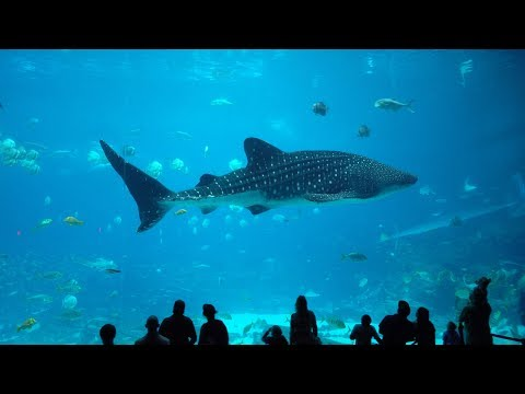 America's Largest Aquarium (Georgia Aquarium Tour)