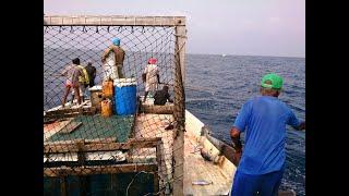 Pole & Line fishing trip Maldives // Lhaviyani atoll // Naifaru & Felivaru