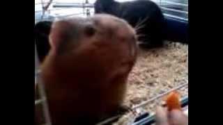 Feeding A Carrot To Ariel