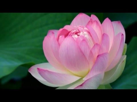 (佛曲) 自由 - 童丽 Freedom - Tong Li (Mandarin Buddhist Song)