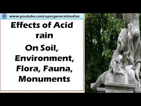 the detrimental effects of acid rain on the soil The effects of acid rain on plant growth can be dramatic if you live in an acid rain-prone area, read this article to learn about safeguarding plants from acid rain damage click here to get more information.