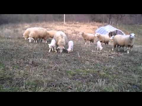 Villages in Serbia 2