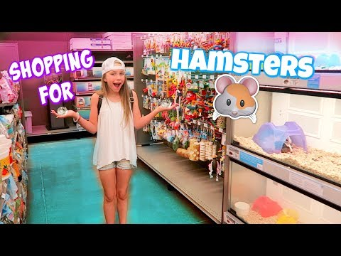 Getting 3 Hamsters! Shopping at Petco and PetSmart for Hamster Gear!